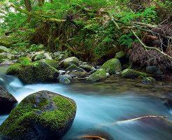 涼しい川の流れ