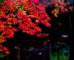 秋の風景の画像
